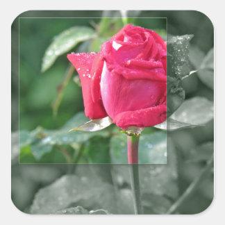 Flores por el lago - brote del rosa rojo calcomania cuadradas personalizada