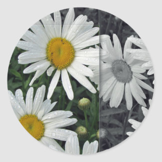 Flores por el lago - margaritas etiqueta redonda