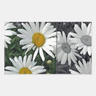 Flores por el lago - margaritas rectangular pegatinas