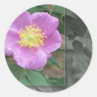 Flores por el lago - rosa pegatinas redondas