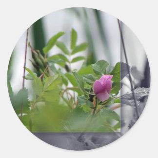 Flores por el lago - rosa pegatina redonda