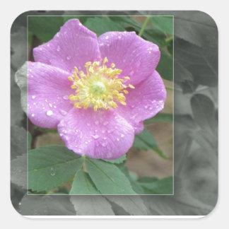 Flores por el lago - rosa calcomanía cuadrada