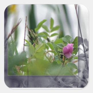 Flores por el lago - rosa calcomanías cuadradas