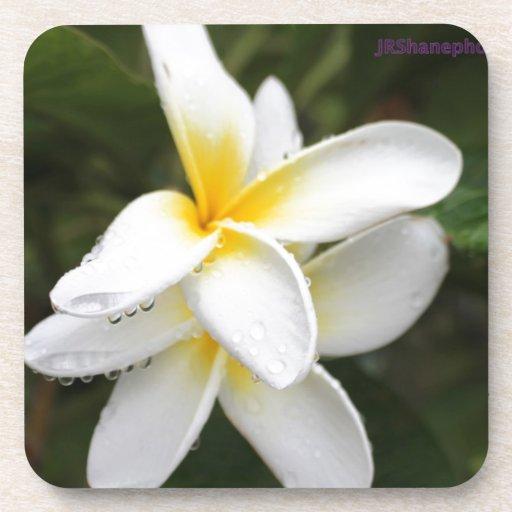 flores posavaso