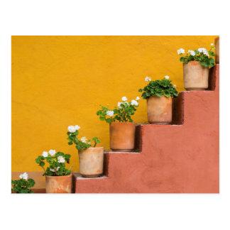 Flores Potted en escalera Tarjetas Postales