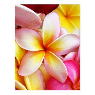 Flores púrpuras amarillas rosadas del Frangipani Postales