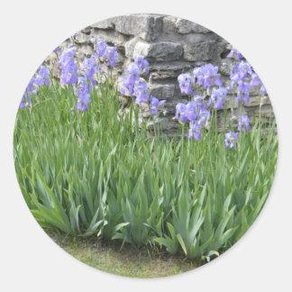 Flores púrpuras azul claro del iris por una pared etiquetas