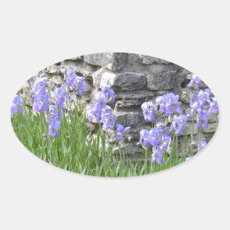 Flores púrpuras azul claro del iris por una pared calcomania de óval