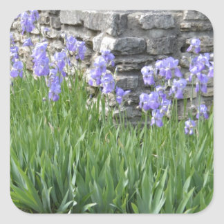 Flores púrpuras azul claro del iris por una pared colcomanias cuadradas