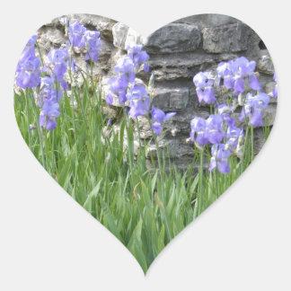 Flores púrpuras azul claro del iris por una pared calcomania corazon personalizadas