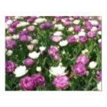 Flores púrpuras/blancas invitación personalizada