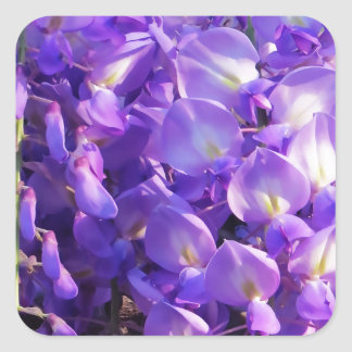 Flores púrpuras bonitas de las glicinias