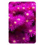 Flores púrpuras bonitas en la plena floración imán de vinilo