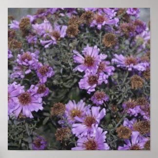 Flores púrpuras bonitas impresiones