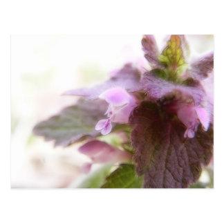 Flores púrpuras de Deadnettle Postales