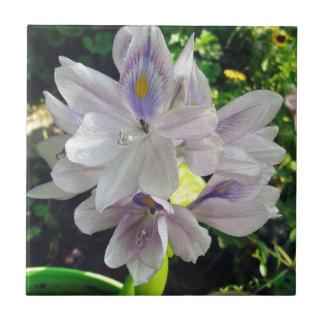 Flores púrpuras de la planta de la charca azulejo cuadrado pequeño