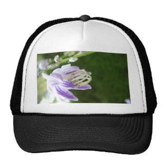 Flores púrpuras de la primavera de la lavanda de l gorras