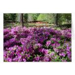 Flores púrpuras de las azaleas felicitaciones