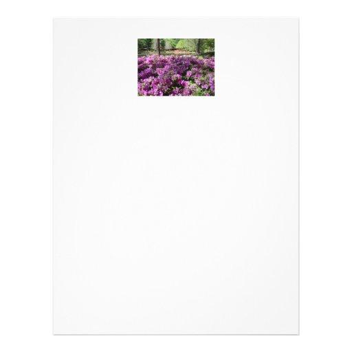 Flores púrpuras de las azaleas flyer a todo color