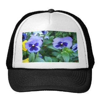 Flores púrpuras de los pensamientos del jardín de  gorras de camionero