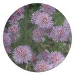 Flores púrpuras de punta plato para fiesta