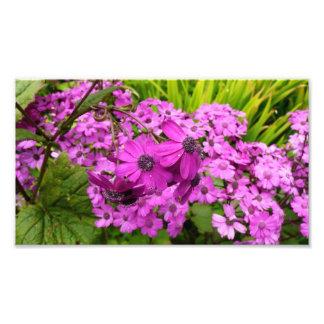 Flores púrpuras de San Francisco Cojinete
