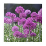 Flores púrpuras del bosque de la primavera del ajo teja