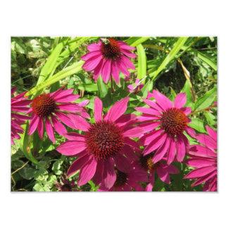 Flores púrpuras del cono fotografías