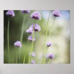 Flores púrpuras del crecimiento común de la hierba póster