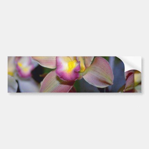 Flores púrpuras del Cymbidium Etiqueta De Parachoque
