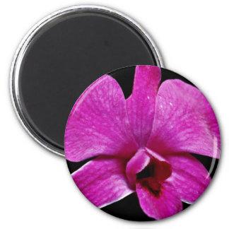 Flores púrpuras del dendrobium imán de nevera