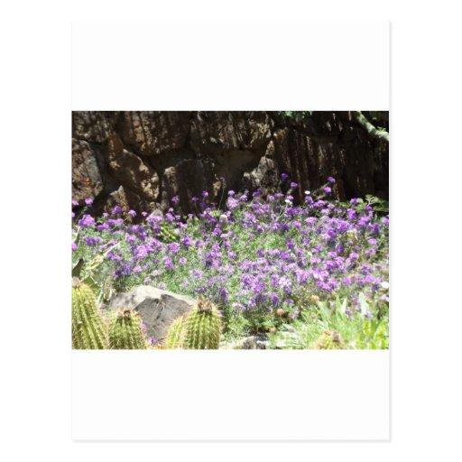 Flores púrpuras del desierto postales