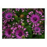 Flores púrpuras del fuego artificial tarjeta