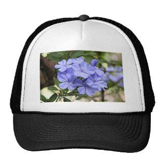 Flores púrpuras del grafito en la floración gorros bordados