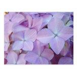 Flores púrpuras del Hydrangea de la lavanda floral Tarjeta Postal