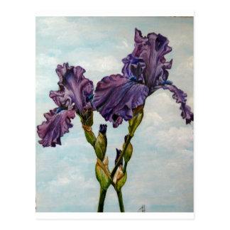 Flores púrpuras del iris barbudo tarjeta postal