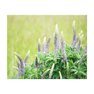 Flores púrpuras del Lupine Lona Estirada Galerias