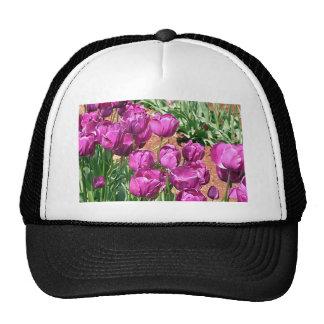 Flores púrpuras del tulipán en la floración 3 gorras de camionero