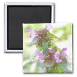 Flores púrpuras delicadas de Deadnettle Imán Cuadrado