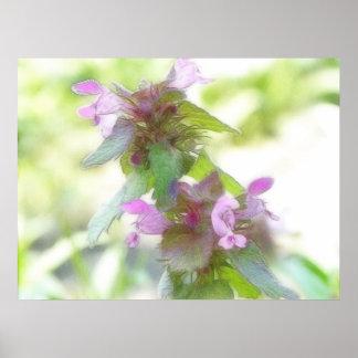 Flores púrpuras delicadas de Deadnettle Póster