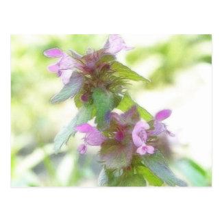Flores púrpuras delicadas de Deadnettle Tarjeta Postal