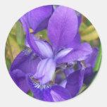 Flores púrpuras etiquetas redondas