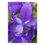 Flores púrpuras felicitación