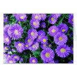 Flores púrpuras felicitacion