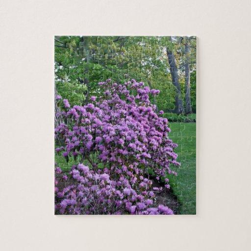 Flores púrpuras fragantes en el jardín rompecabezas
