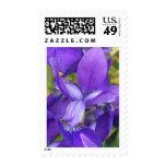 Flores púrpuras franqueo