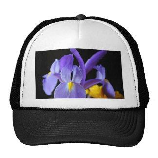Flores púrpuras gorra