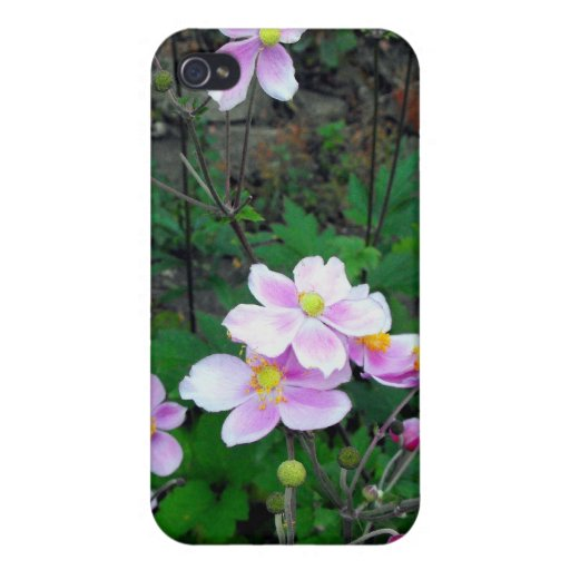 Flores púrpuras iPhone 4 carcasas