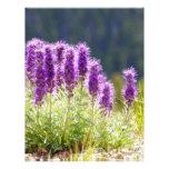 Flores púrpuras membrete a diseño