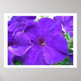 Flores púrpuras posters
